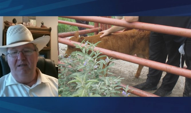 Watch: Search for Biblical red heifer reaches Texas